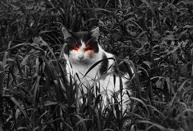 [Imagen: evilcat2.jpg]
